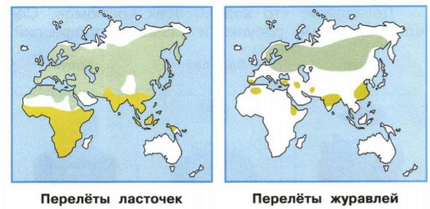 Окружающий мир 1 класс рабочая тетрадь Плешаков 2 часть страница 13 задание