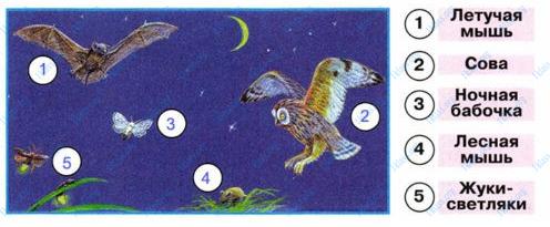 Ответ по Окружающему миру 1 класс рабочая тетрадь Плешаков 2 часть страница 33 задание 2-2