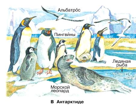 Окружающий мир 1 класс учебник Плешаков 2 часть стр 11