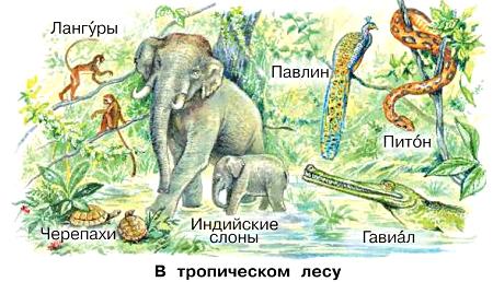 Окружающий мир 1 класс учебник Плешаков 2 часть стр 13