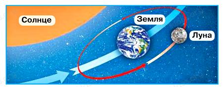Окружающий мир 1 класс учебник Плешаков 2 часть ответы стр 34-2