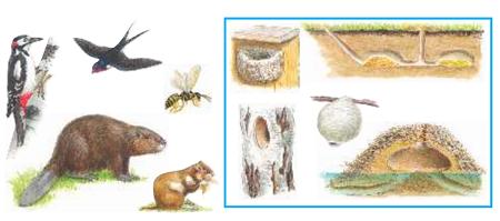 Окружающий мир 1 класс учебник Плешаков 1 часть стр 73-2-3