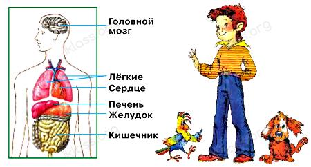 Окружающий мир 2 класс учебник Плешаков 2 часть стр 5
